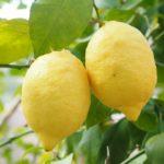 Jus de citron et eau chaude réveillent tes organes digestifs avant le p'tit déj' !